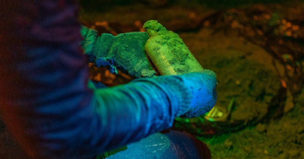 Bagaimana salah satu eksperimen ilmiah tertua di dunia muncul dari kotoran