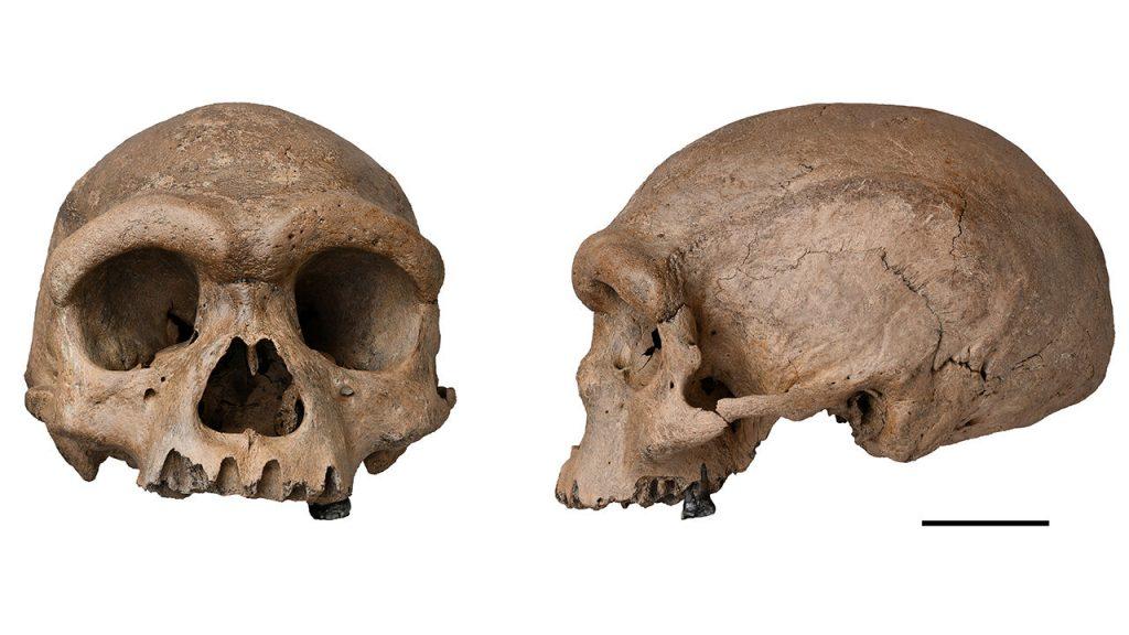 Tengkorak 'Manusia Naga' yang luar biasa mungkin adalah Denisovan yang sulit ditangkap - atau manusia tipe baru    Ilmu