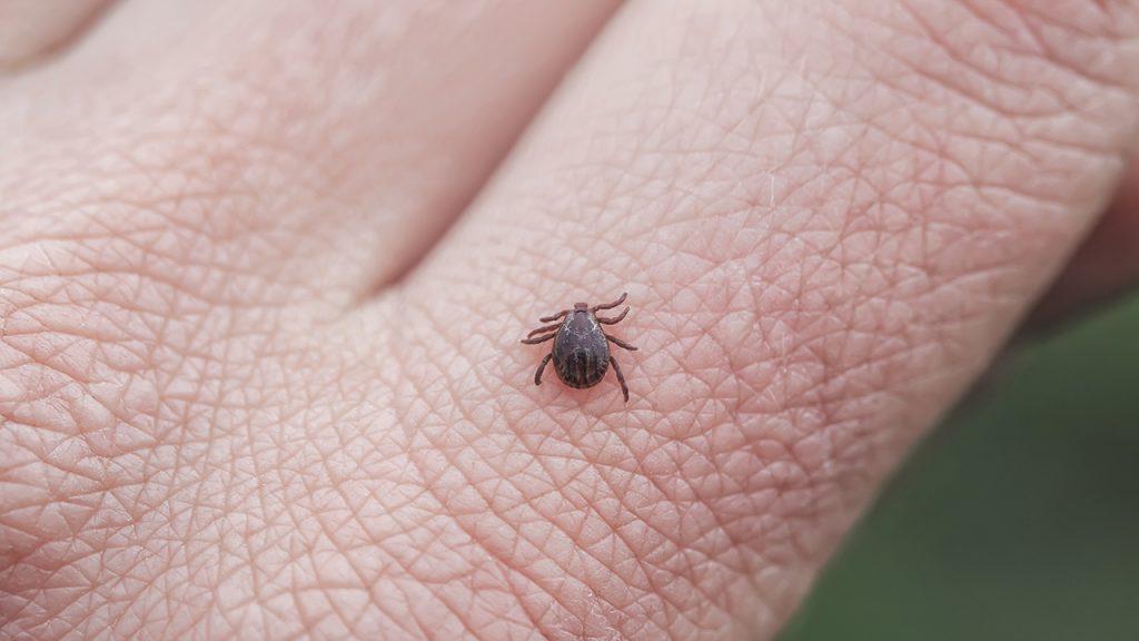 Connecticut mengonfirmasi infeksi virus Poisin: Apa yang perlu diketahui tentang penyakit yang ditularkan melalui kutu