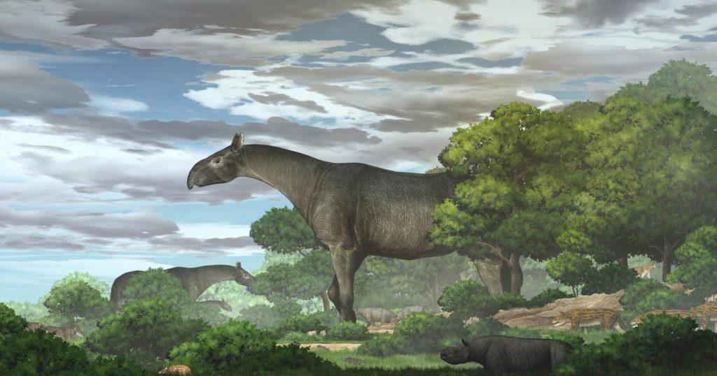 Fosil baru mengungkapkan salah satu mamalia darat terbesar yang pernah ditemukan - badak raksasa