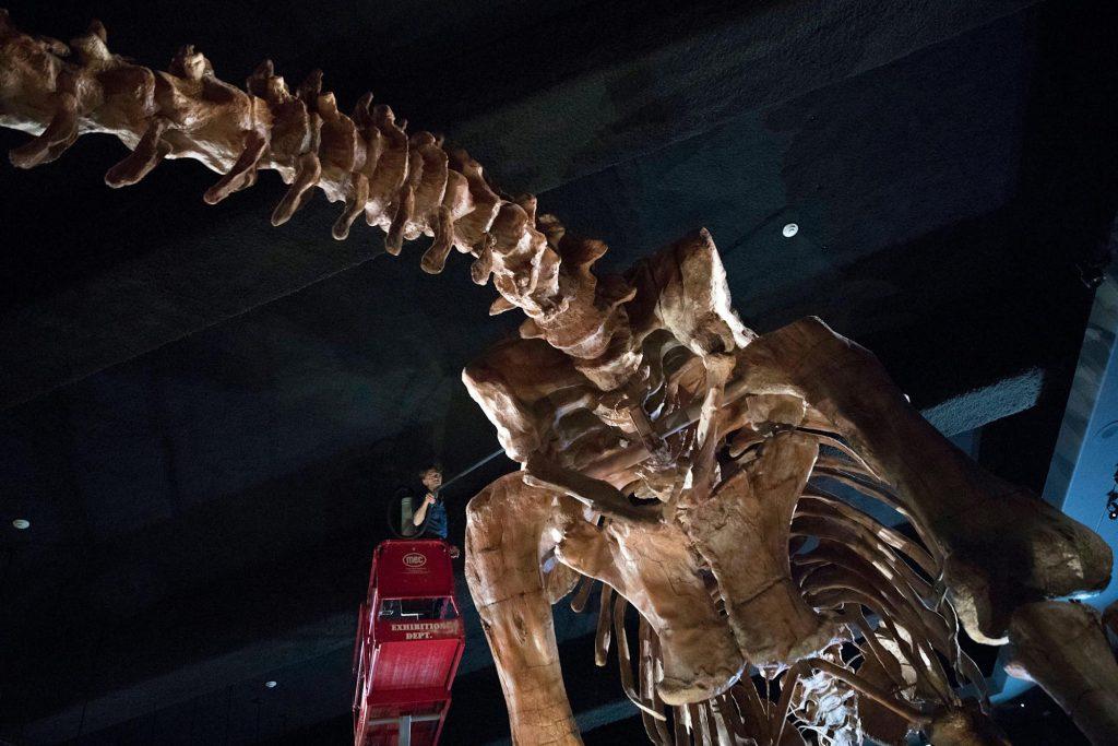 Salah satu spesies dinosaurus terbesar di dunia ditemukan di Australia