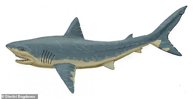 Gigi hiu yang teridentifikasi berasal dari beberapa spesies, termasuk dari kelompok Squalicorax Kapur akhir yang telah punah.  Digambarkan, kesan seorang seniman tentang hiu Squalicorax