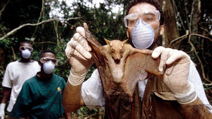 Peneliti Ebola dengan Megabat