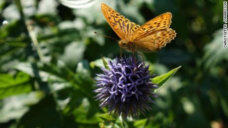 Para ilmuwan akhirnya menemukan bagaimana kupu-kupu terbang