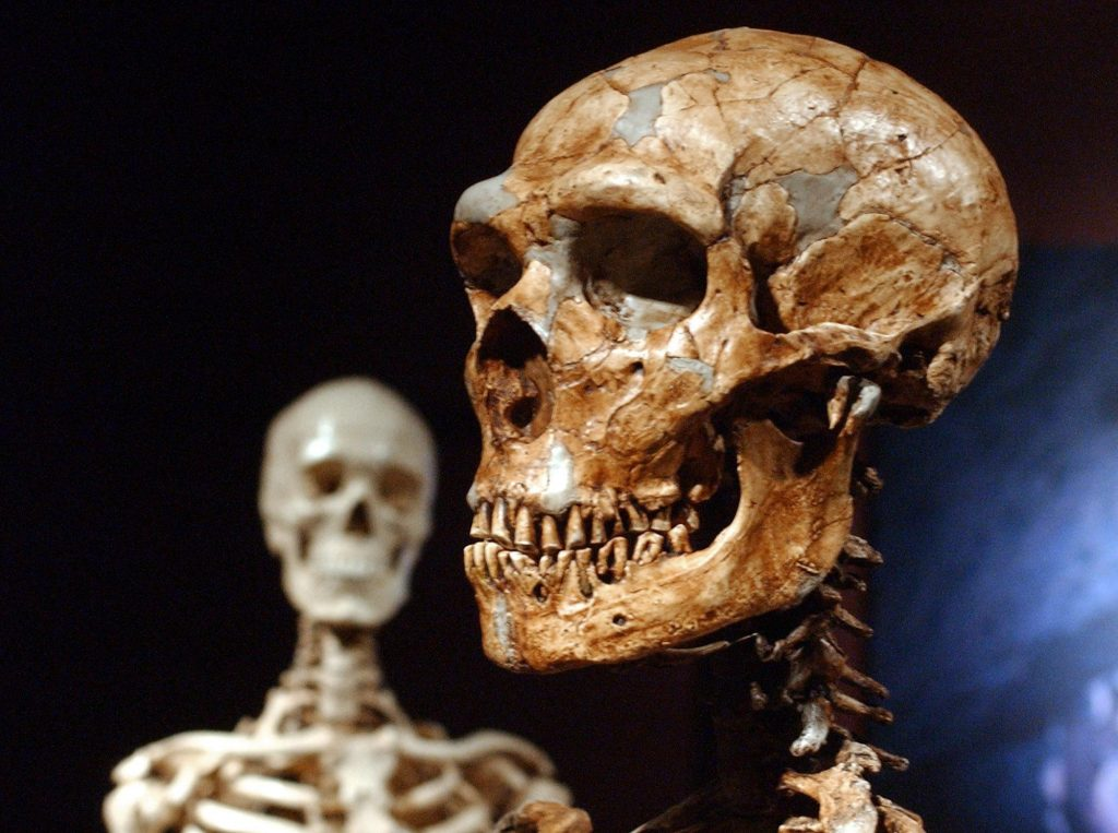 Penelitian menunjukkan bahwa hanya 7% dari DNA kita yang unik untuk manusia modern