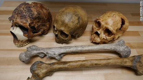 Fosil manusia menunjukkan variasi otak (tengkorak) dan ukuran tubuh (femur) selama periode Pleistosen.