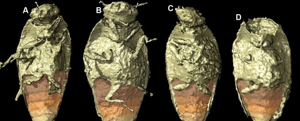 Serangga Trias yang diawetkan dengan sempurna ditemukan di kotoran dinosaurus untuk pertama kalinya