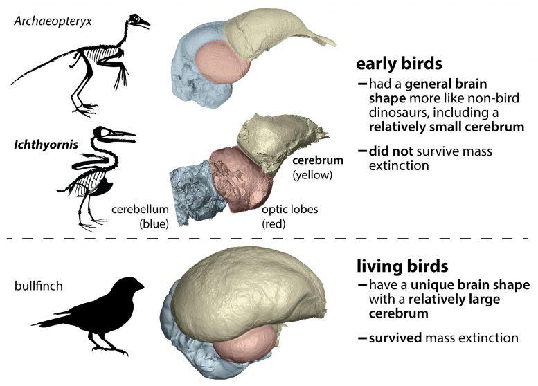 perbandingan otak burung