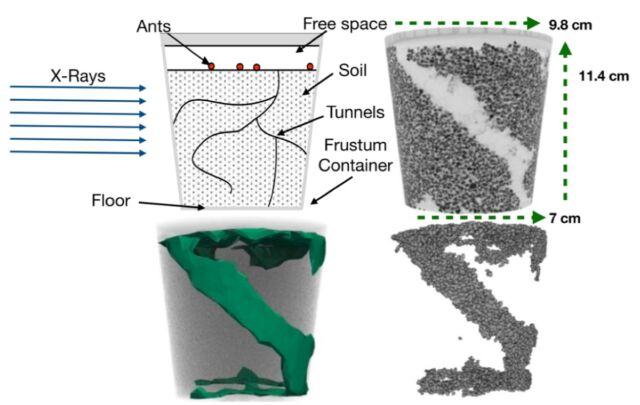 Kiri atas: desain eksperimental.  Kanan atas: Gambar sinar-X dari terowongan yang sudah selesai.  Kiri bawah: pemasangan model partikel yang dihilangkan.  Kanan bawah: Rekonstitusi numerik partikel yang dikeluarkan oleh semut di lokasi awal.