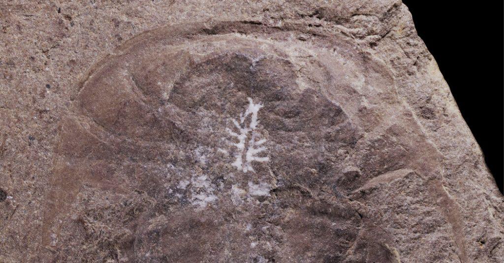 Otak ini tetap utuh dalam fosil berusia 310 juta tahun
