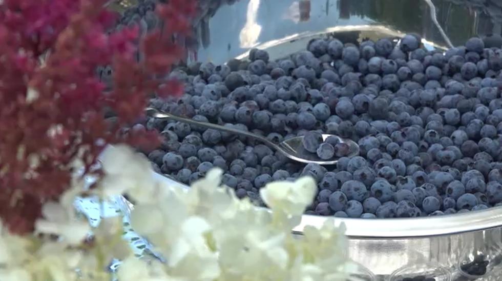 """Peternakan untuk berpartisipasi dalam """"Wild Blueberry Weekend"""" di Maine"""