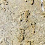 Jejak kaki manusia tertua ditemukan di Amerika Utara di New Mexico |  berita sains dan teknologi