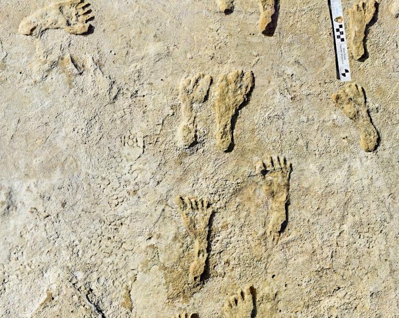 Jejak kaki manusia tertua ditemukan di Amerika Utara di New Mexico    berita sains dan teknologi