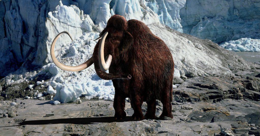 Perusahaan baru dengan misi liar: Membawa kembali mamut berbulu